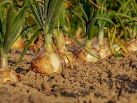 Los trabajadores agrarios por cuenta ajena en situación de inactividad pueden diferir el pago de las cuotas hasta abril
